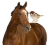 Odd Animal Pairs, A Horse and A Sparrow?