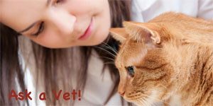 Cat-Ask-a-Vet-Chiwah-Carol-Slater-Word-Weaver-Chiwah-petwrites.com-copyright-mtr-300px