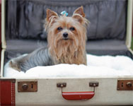How Hard Is It to Find Pet Friendly Hotel Chains in New York City?