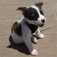 How About This Precious Pet Rescue Adoption Dog?