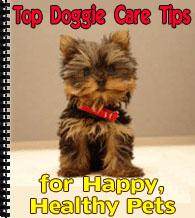 Top Doggie Care Tips cover