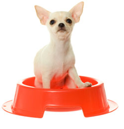 What Health Problems Can a Small Slow Feed Pet Bowl Solve?