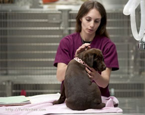 If Your Vaccinated Pup is Vomiting and Has Canine Diarrhea, Could It Be Parvo Symptoms?