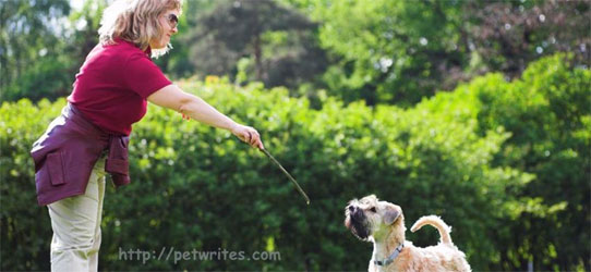What Beyond Your Dog Training Treat Will Affect Your Training Sessions?