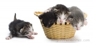 When Feeding Orphaned Kittens, How Do You Check Their Eyes and Ears?