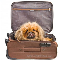 What Are the Keys to Pet Friendly Travel Once You're in The Big Apple?