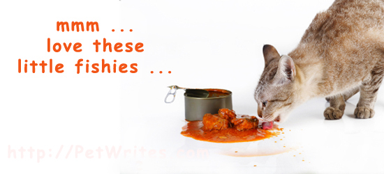 Can You Feed Cats Sardines? Are They a Better Choice than Tuna?