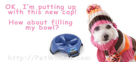 How Can You Use a Small Slow Feed Pet Bowl?