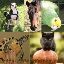 5-Animal Collage watermarked