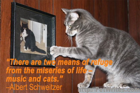 Are You Using Animals or Animal Quotes to Market Your Business?