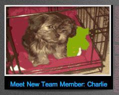 Would You Believe – Dog Joins Internet Business Marketing Team?