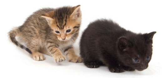 Who Could Have Imagined Such a Result from Feeding Orphaned Kittens?