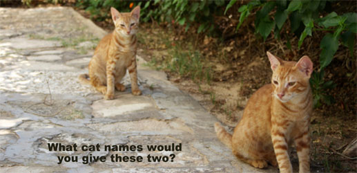 What Do Your Cat Names Say About YOU?