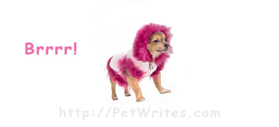 Is a Fancy Coat All a Teacup Chihuahua Needs to Get Through the Winter?