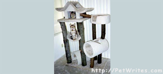 Where Can You Find Great Cat Trees for Big Cats?