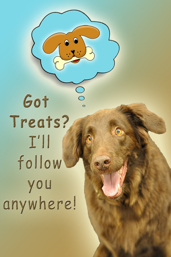 Got-Treats-Ill-Follow-You-Anywhere.jpg