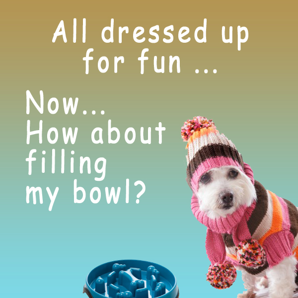 Terrier, Silly New Hat, Blue Slow Feed Dog Bowl