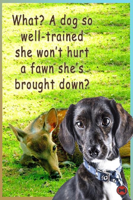 What dog commands will overcome killer instinct
