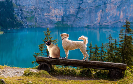 Cat and Dog on Log at Mountain Pool